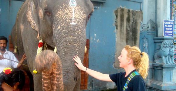 Aimee elephant